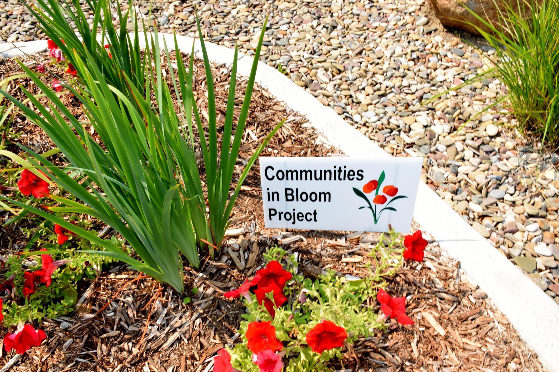 Communities in Bloom 2015